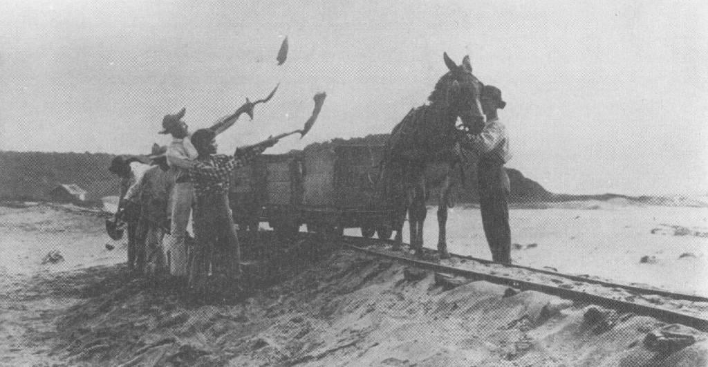 Retirada e transporte de areia monazítica de Guarapari no início do século XX. O material seguia para galpões de separação e estocagem, como retrata a primeira imagem. Fotos: Acervo Ufes